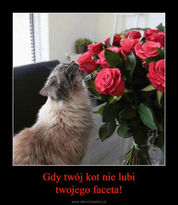 Gdy twój kot nie lubitwojego faceta! –
