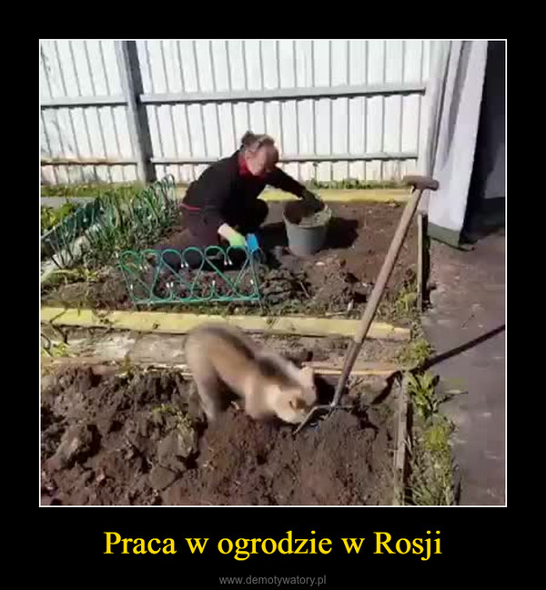 Praca w ogrodzie w Rosji –