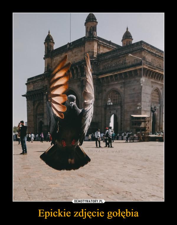 Epickie zdjęcie gołębia –