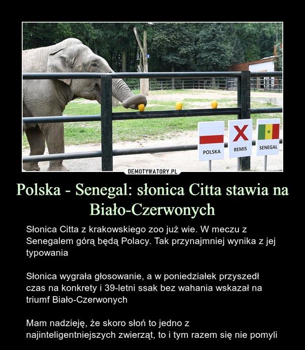 Polska - Senegal: słonica Citta stawia na Biało-Czerwonych – Słonica Citta z krakowskiego zoo już wie. W meczu z Senegalem górą będą Polacy. Tak przynajmniej wynika z jej typowaniaSłonica wygrała głosowanie, a w poniedziałek przyszedł czas na konkrety i 39-letni ssak bez wahania wskazał na triumf Biało-CzerwonychMam nadzieję, że skoro słoń to jedno z najinteligentniejszych zwierząt, to i tym razem się nie pomyli