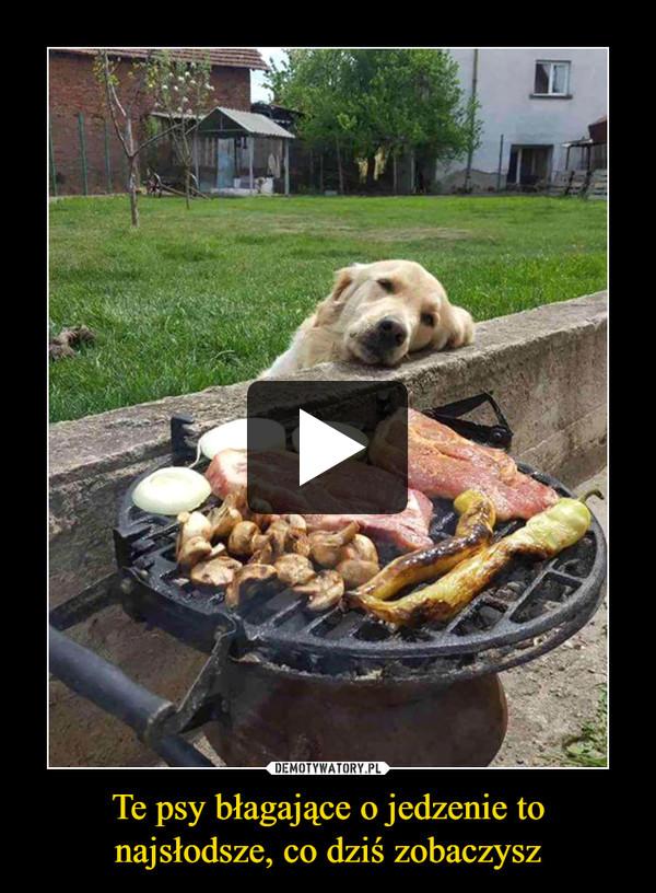 Te psy błagające o jedzenie to najsłodsze, co dziś zobaczysz –