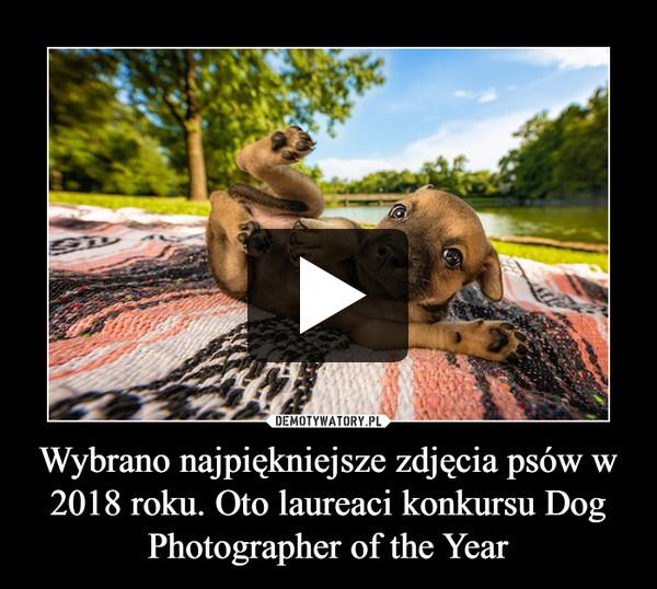 Wybrano najpiękniejsze zdjęcia psów w 2018 roku. Oto laureaci konkursu Dog Photographer of the Year –