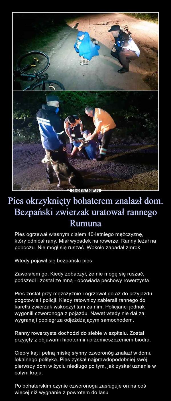 Pies okrzyknięty bohaterem znalazł dom. Bezpański zwierzak uratował rannego Rumuna – Pies ogrzewał własnym ciałem 40-letniego mężczyznę, który odniósł rany. Miał wypadek na rowerze. Ranny leżał na poboczu. Nie mógł się ruszać. Wokoło zapadał zmrok.Wtedy pojawił się bezpański pies.Zawołałem go. Kiedy zobaczył, że nie mogę się ruszać, podszedł i został ze mną - opowiada pechowy rowerzysta.Pies został przy mężczyźnie i ogrzewał go aż do przyjazdu pogotowia i policji. Kiedy ratownicy zabierali rannego do karetki zwierzak wskoczył tam za nim. Policjanci jednak wygonili czworonoga z pojazdu. Nawet wtedy nie dał za wygraną i pobiegł za odjeżdżającym samochodem.Ranny rowerzysta dochodzi do siebie w szpitalu. Został przyjęty z objawami hipotermii i przemieszczeniem biodra.Ciepły kąt i pełną miskę słynny czworonóg znalazł w domu lokalnego polityka. Pies zyskał najprawdopodobniej swój pierwszy dom w życiu niedługo po tym, jak zyskał uznanie w całym kraju.Po bohaterskim czynie czworonoga zasługuje on na coś więcej niż wygnanie z powrotem do lasu