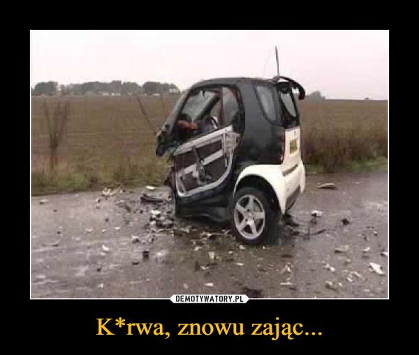 K*rwa, znowu zając... –