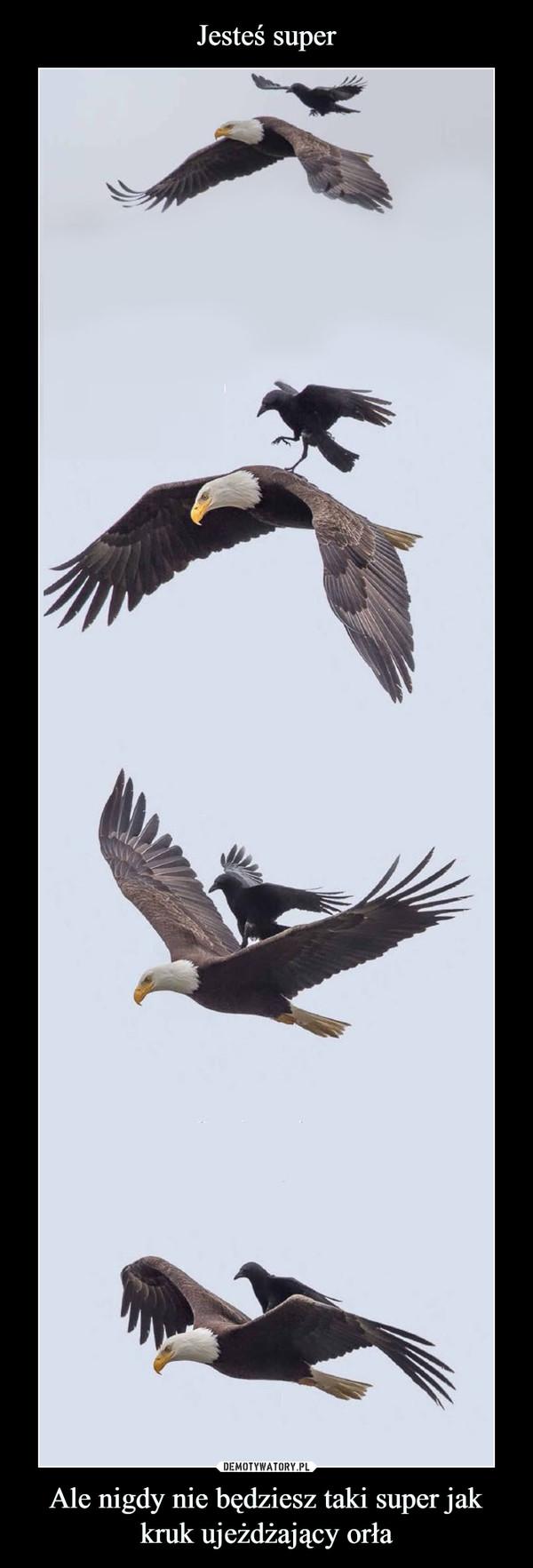 Ale nigdy nie będziesz taki super jak kruk ujeżdżający orła –