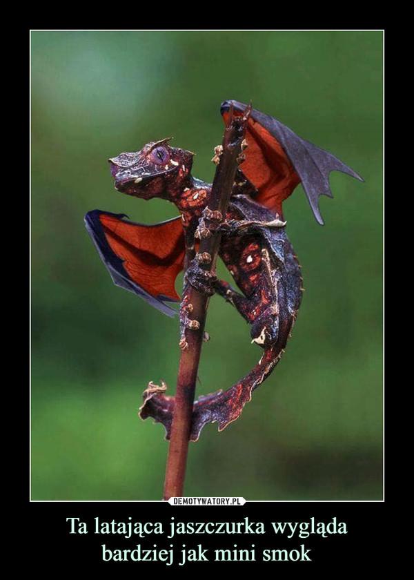 Ta latająca jaszczurka wyglądabardziej jak mini smok –