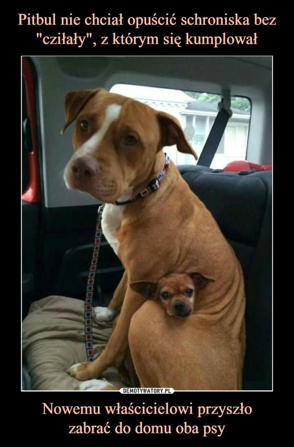Nowemu właścicielowi przyszłozabrać do domu oba psy –