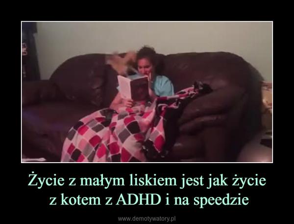 Życie z małym liskiem jest jak życie z kotem z ADHD i na speedzie –