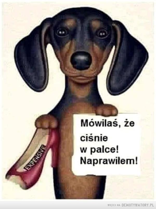 Dobry pies zrobi wszystko by ułatwić życie właścicielowi –  Mówiłaś, że ciśnie w palce. Naprawiłem!