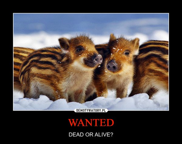 WANTED – DEAD OR ALIVE?