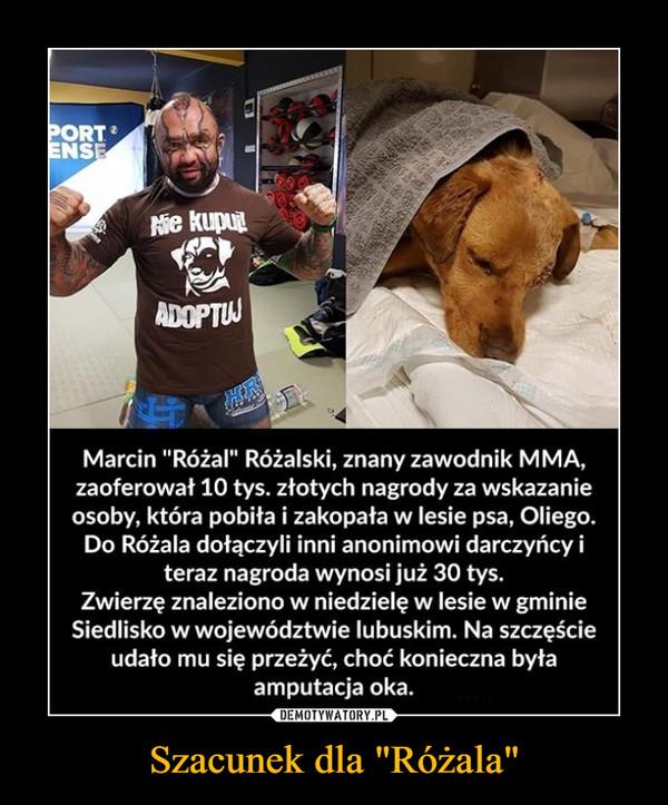 """Szacunek dla """"Różala"""" –  Marcin """"Różal"""" Różalski, znany zawodnik M MA, zaoferował 10 tys. złotych nagrody za wskazanie osoby, która pobiła i zakopała w lesie psa, Oliego. Do Różala dołączyli inni anonimowi darczyńcy i teraz nagroda wynosi już 30 tys. Zwierzę znaleziono w niedzielę w lesie w gminie Siedlisko w województwie lubuskim. Na szczęście udało mu się przeżyć, choć konieczna była amputacja oka."""