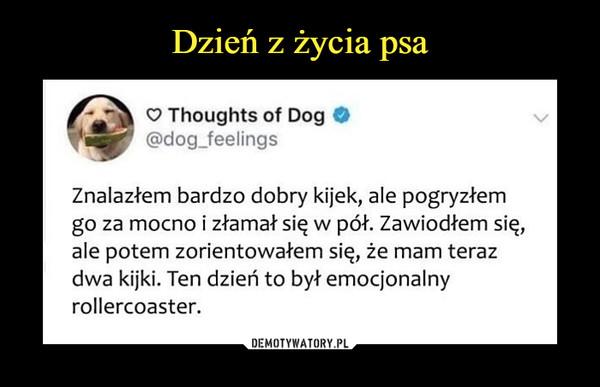 –  Thoughts of Dog @dog_feelings Znalazłem bardzo dobry kijek, ale pogryzłem go za mocno i złamał się w pół. Zawiodłem się, ale potem zorientowałem się, że mam teraz dwa kijki. Ten dzień to był emocjonalny rollercoaster.