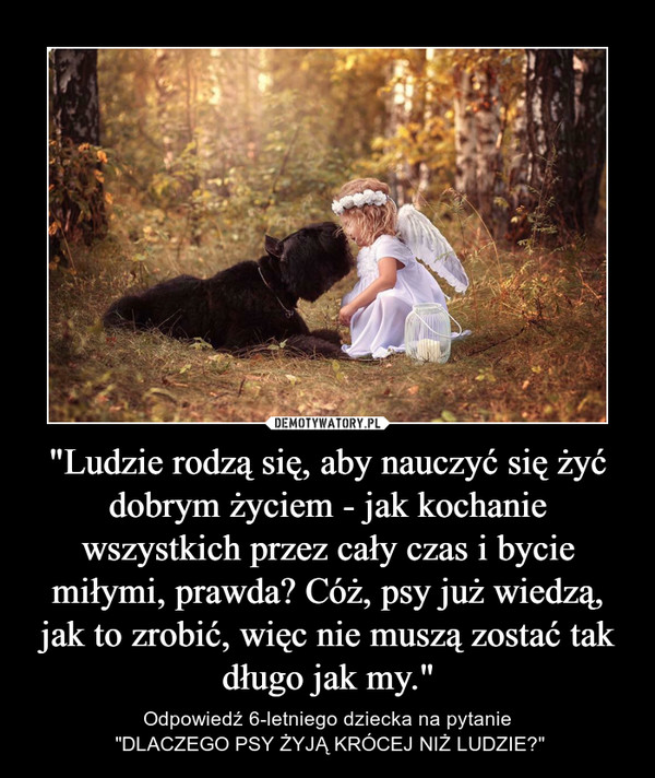 """""""Ludzie rodzą się, aby nauczyć się żyć dobrym życiem - jak kochanie wszystkich przez cały czas i bycie miłymi, prawda? Cóż, psy już wiedzą, jak to zrobić, więc nie muszą zostać tak długo jak my."""" – Odpowiedź 6-letniego dziecka na pytanie """"DLACZEGO PSY ŻYJĄ KRÓCEJ NIŻ LUDZIE?"""""""