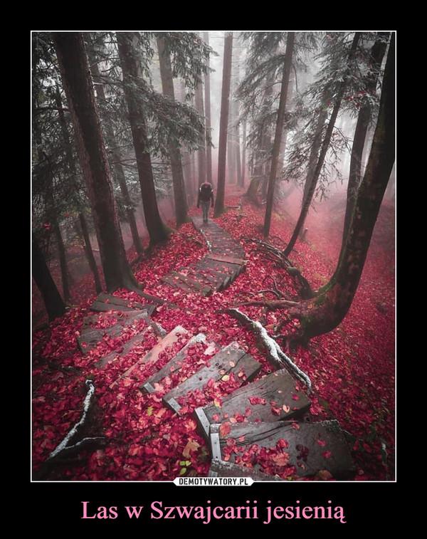 Las w Szwajcarii jesienią –