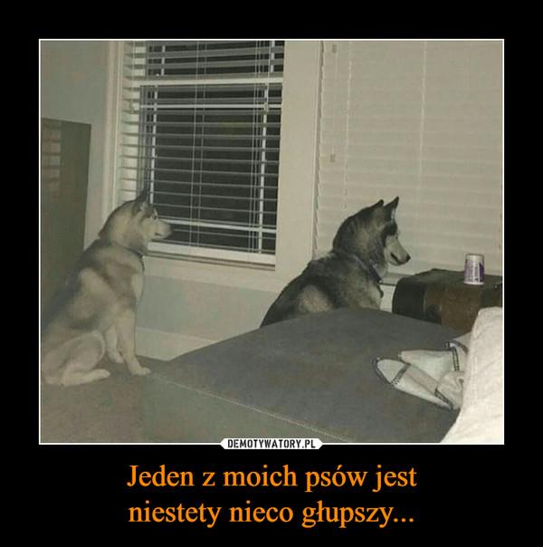 Jeden z moich psów jestniestety nieco głupszy... –