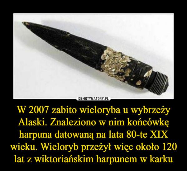 W 2007 zabito wieloryba u wybrzeży Alaski. Znaleziono w nim końcówkę harpuna datowaną na lata 80-te XIX wieku. Wieloryb przeżył więc około 120 lat z wiktoriańskim harpunem w karku –