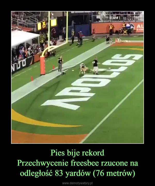 Pies bije rekordPrzechwycenie freesbee rzucone na odległość 83 yardów (76 metrów) –