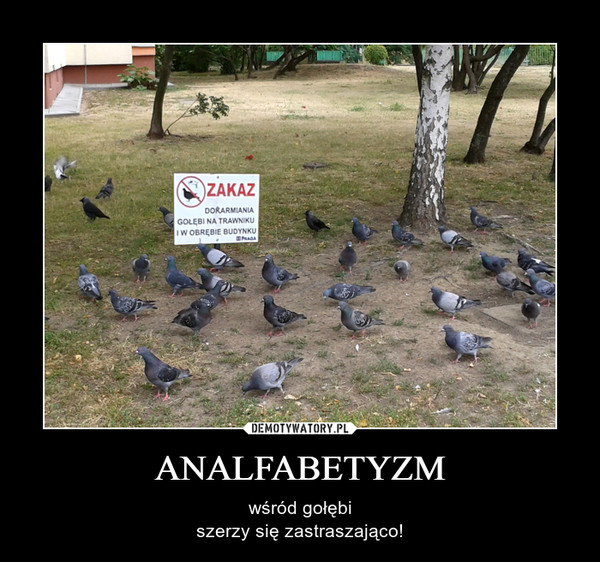 ANALFABETYZM – wśród gołębiszerzy się zastraszająco!