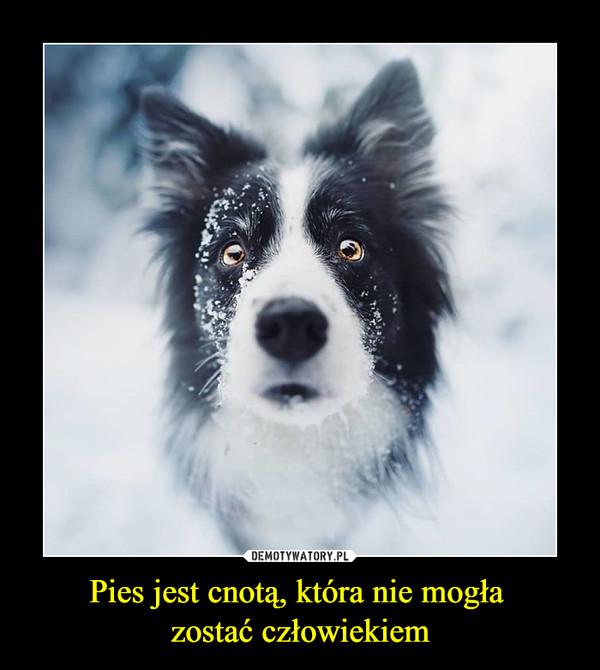 Pies jest cnotą, która nie mogła zostać człowiekiem –