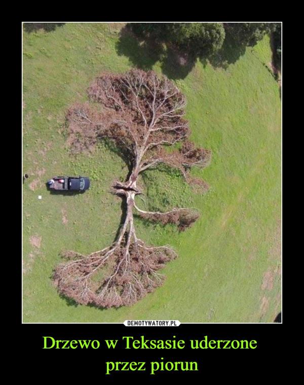Drzewo w Teksasie uderzone przez piorun –