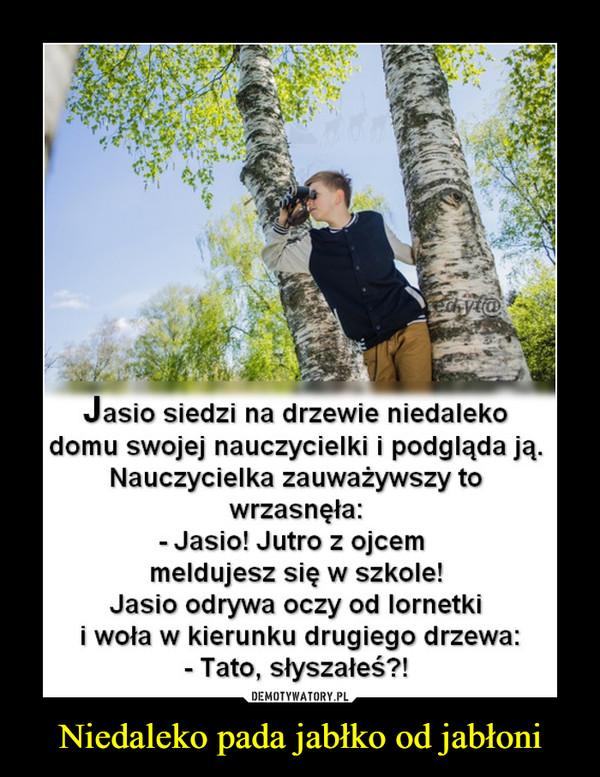 Niedaleko pada jabłko od jabłoni –  Jasio siedzi na drzewie niedaleko domu swojej nauczycielki i podgląda ją. nauczycielka zauważywszy to wrzasnęła: - Jasio! Jutro z ojcem meldujesz się w szkole! Jasio odrywa oczy od lornetki i woła w kierunku drugiego drzewa: - Tato, słyszałeś?