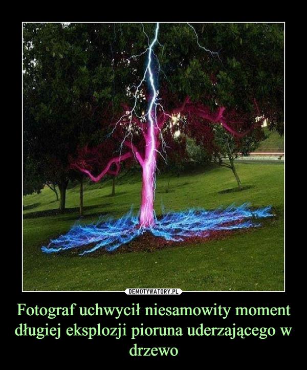Fotograf uchwycił niesamowity moment długiej eksplozji pioruna uderzającego w drzewo –