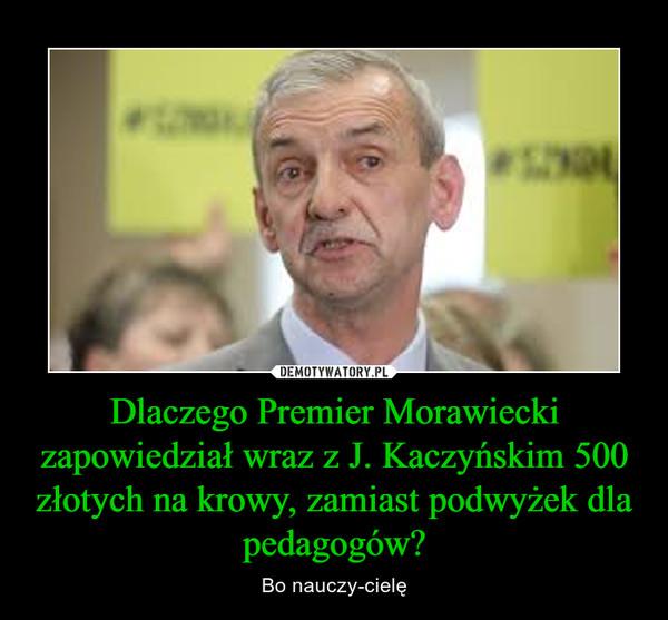 Dlaczego Premier Morawiecki zapowiedział wraz z J. Kaczyńskim 500 złotych na krowy, zamiast podwyżek dla pedagogów? – Bo nauczy-cielę