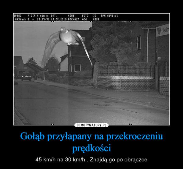 Gołąb przyłapany na przekroczeniu prędkości – 45 km/h na 30 km/h . Znajdą go po obrączce