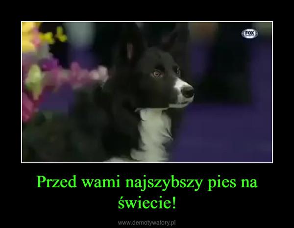 Przed wami najszybszy pies na świecie! –