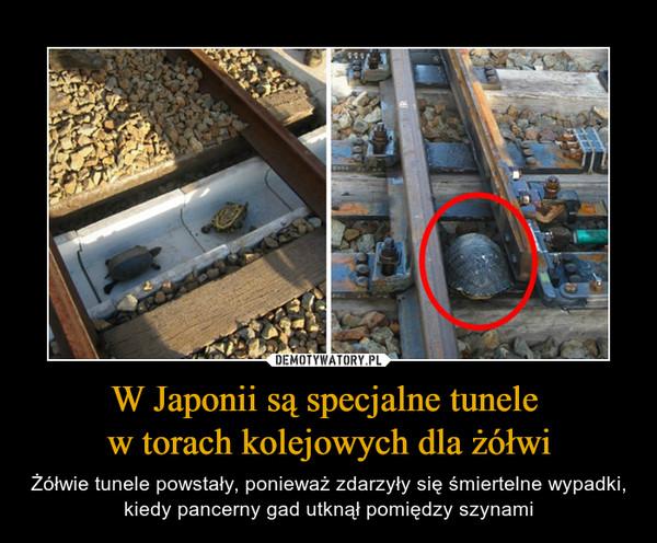 W Japonii są specjalne tunele w torach kolejowych dla żółwi – Żółwie tunele powstały, ponieważ zdarzyły się śmiertelne wypadki, kiedy pancerny gad utknął pomiędzy szynami