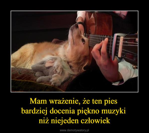 Mam wrażenie, że ten pies bardziej docenia piękno muzyki niż niejeden człowiek –