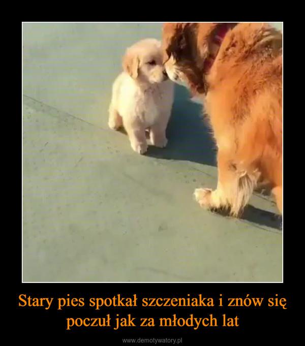 Stary pies spotkał szczeniaka i znów się poczuł jak za młodych lat –