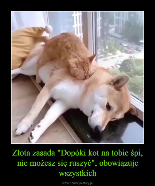 """Złota zasada """"Dopóki kot na tobie śpi, nie możesz się ruszyć"""", obowiązuje wszystkich –"""