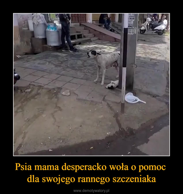 Psia mama desperacko woła o pomoc dla swojego rannego szczeniaka –