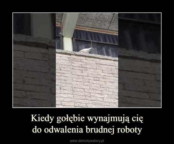 Kiedy gołębie wynajmują ciędo odwalenia brudnej roboty –