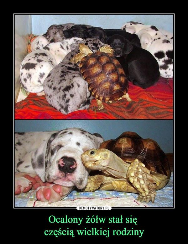 Ocalony żółw stał się częścią wielkiej rodziny –