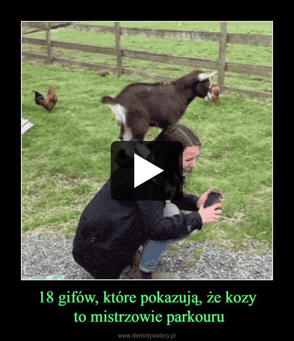 18 gifów, które pokazują, że kozy to mistrzowie parkouru –