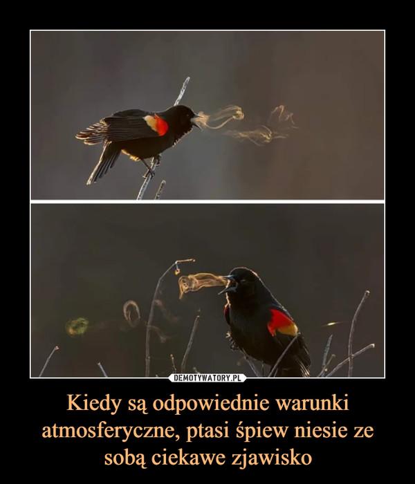 Kiedy są odpowiednie warunki atmosferyczne, ptasi śpiew niesie ze sobą ciekawe zjawisko –