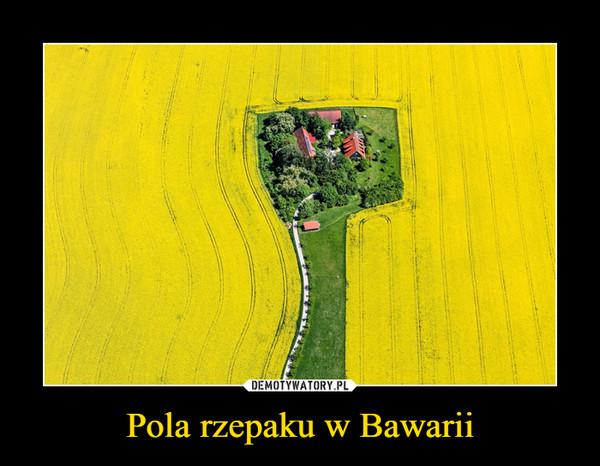 Pola rzepaku w Bawarii –