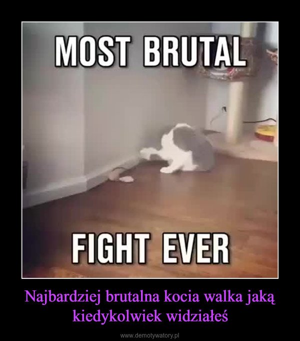 Najbardziej brutalna kocia walka jaką kiedykolwiek widziałeś –