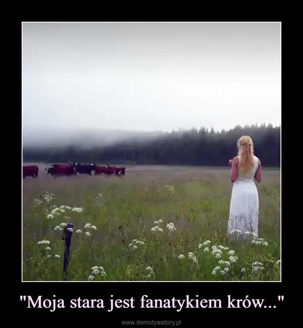 """""""Moja stara jest fanatykiem krów..."""" –"""