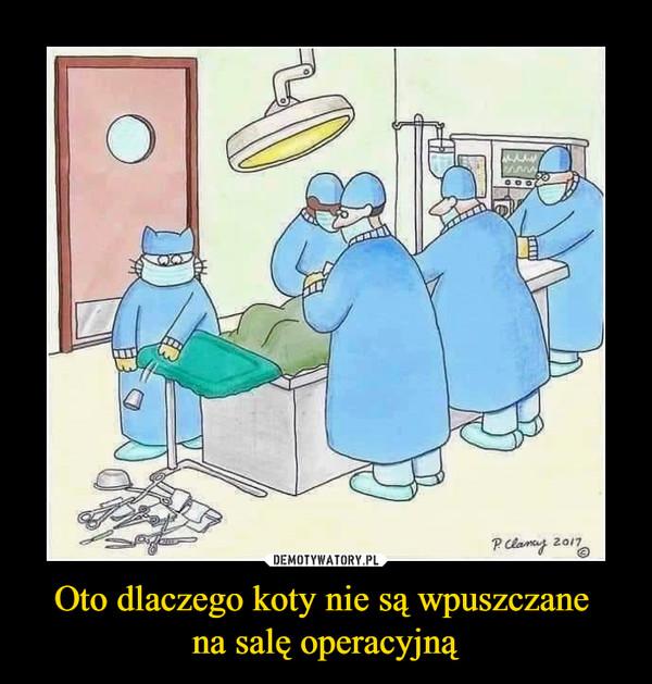 Oto dlaczego koty nie są wpuszczane na salę operacyjną –