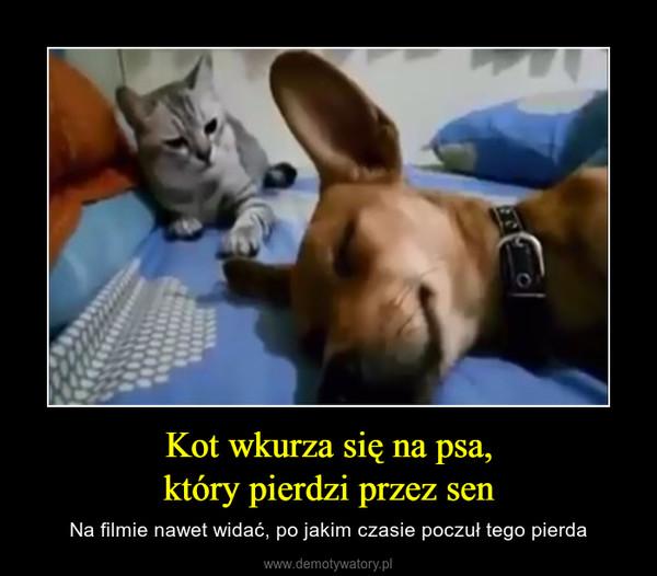 Kot wkurza się na psa,który pierdzi przez sen – Na filmie nawet widać, po jakim czasie poczuł tego pierda