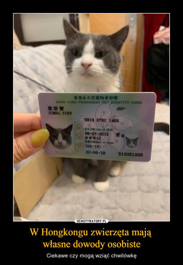 W Hongkongu zwierzęta mają własne dowody osobiste – Ciekawe czy mogą wziąć chwilówkę