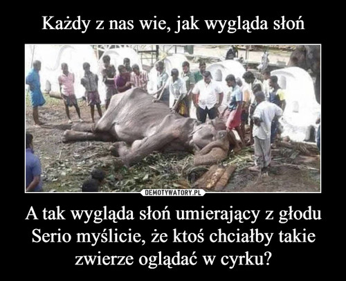 Każdy z nas wie, jak wygląda słoń A tak wygląda słoń umierający z głodu Serio myślicie, że ktoś chciałby takie zwierze oglądać w cyrku?