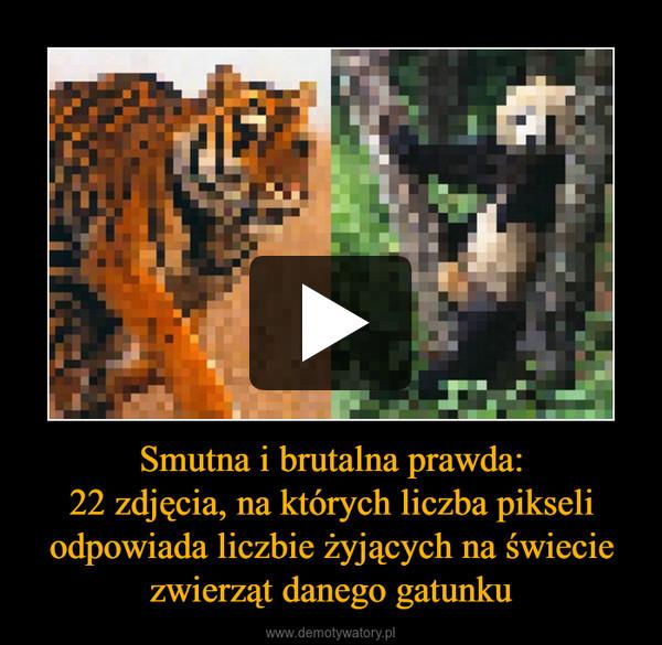 Smutna i brutalna prawda:22 zdjęcia, na których liczba pikseli odpowiada liczbie żyjących na świecie zwierząt danego gatunku –