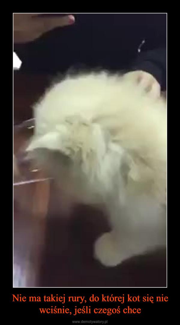 Nie ma takiej rury, do której kot się nie wciśnie, jeśli czegoś chce –