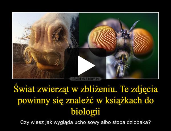 Świat zwierząt w zbliżeniu. Te zdjęcia powinny się znaleźć w książkach do biologii – Czy wiesz jak wygląda ucho sowy albo stopa dziobaka?