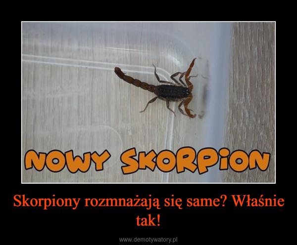 Skorpiony rozmnażają się same? Właśnie tak! –