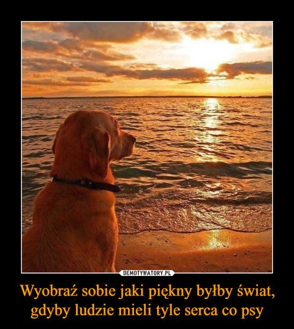 Wyobraź sobie jaki piękny byłby świat, gdyby ludzie mieli tyle serca co psy –